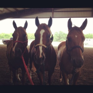 Three horses looking awesome